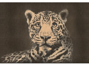 Фрески и фотообои, Каталог Сюжеты, арт. ID136553