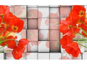 Фотообои «3D фон, кубики, красные тюльпаны»