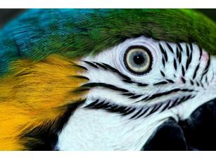 Фотообои «Глаз попугая»