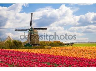 Фотообои «Мельница с Поле тюльпанов»