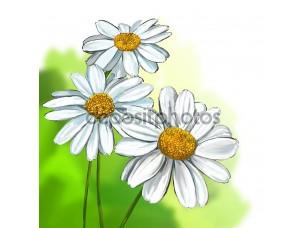 Фотообои «Daisy vector illustration hand drawn painted»