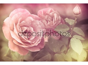 Фотообои «Абстрактные Романтические розы розовые цветы с каплями воды»