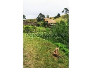 Фотообои «hobbiton мельница с кошкой»