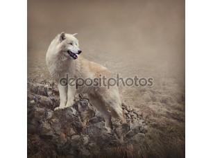 Фотообои «White wolf»