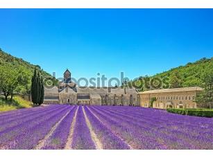 Фотообои «Аббатство senanque цветения лаванды цветы. горд, Люберон, pr»