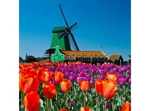 Фотообои «Ветряная мельница в Голландии»