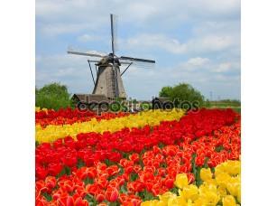 Фотообои «Голландская мельница над полем тюльпанов»