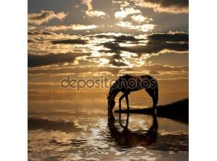 Фотообои «аравийская лошадь»