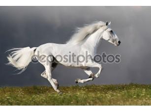 Фотообои «Белая лошадь бежит на фоне темного неба»