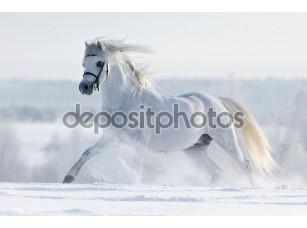 Фотообои «Белая лошадь в зимний период»