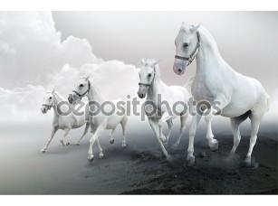 Фотообои «белые лошади»