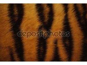 Фотообои «Beautiful tiger fur colorful texture with orange, beige, yellow and black»