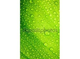 Фотообои «Красивый зеленый лист с каплями воды»