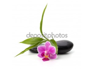 Фотообои «Spa and healthcare concept. Orchid and stones.»