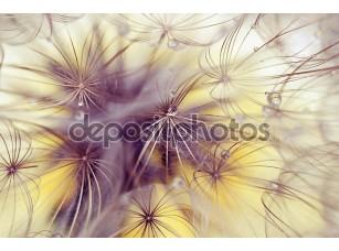 Фотообои «Beauty dandelion»