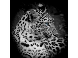 Фотообои «Leopard portrait»