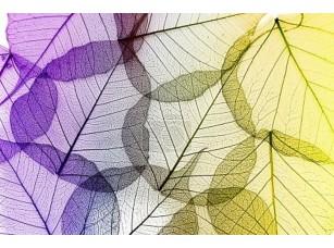 Фотообои «Coloful  leaves  seamless  on white background.»