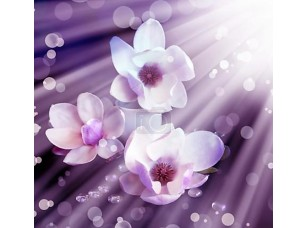 Фотообои «White  flowers»