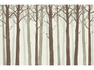 Обои Arbre Стволы arbre 16843