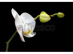 Фреска Белый цветок макросъемка, арт. ID12358