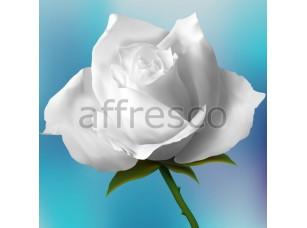 Фреска Белые розы, арт. 7190