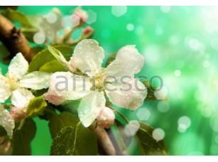 Фреска Белый цветок сакуры, арт. ID11808