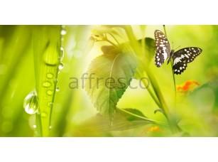 Фреска Бабочка макросъемка, арт. ID13127